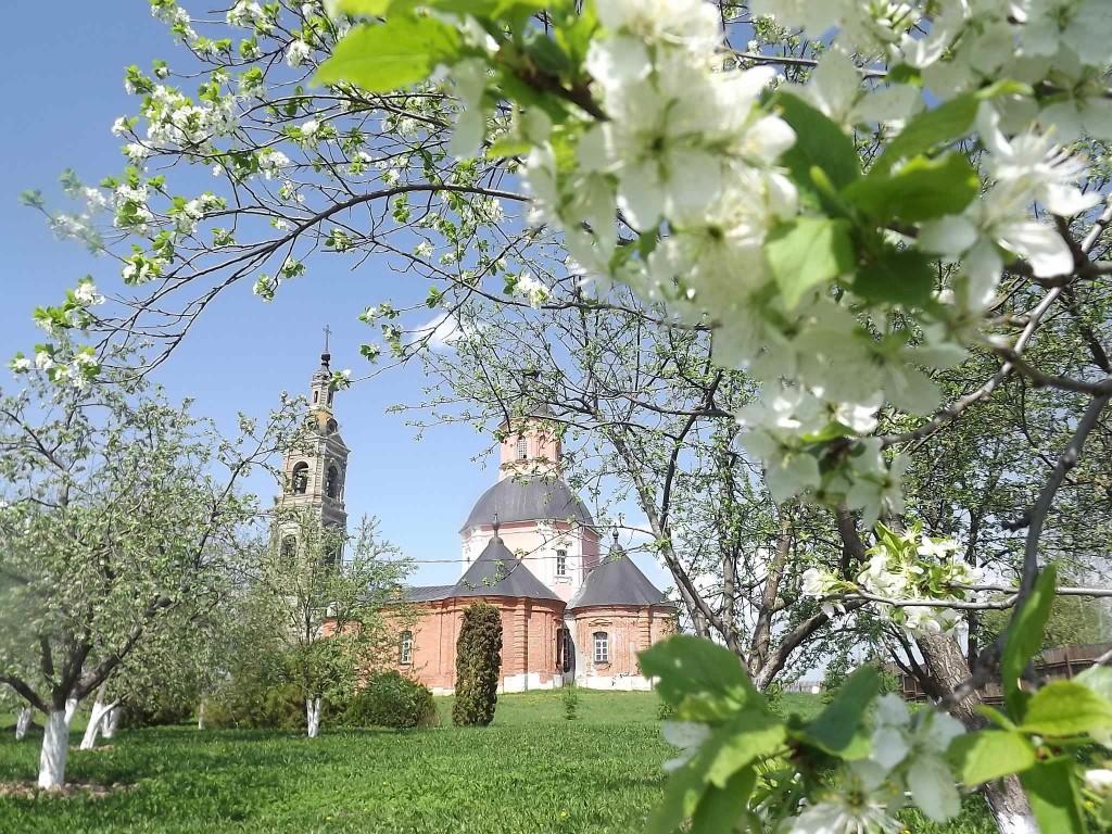 Весенний сад на подворье. Цветут сливы и вишни.