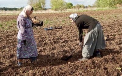 На подворье обители идут сельскохозяйственные работы