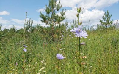 Природа — книга Божия. Виды монастырского подворья в июле